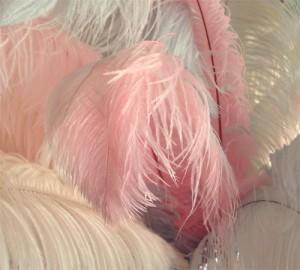 Shabby Feathers