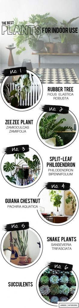elige una planta de interior para decorar